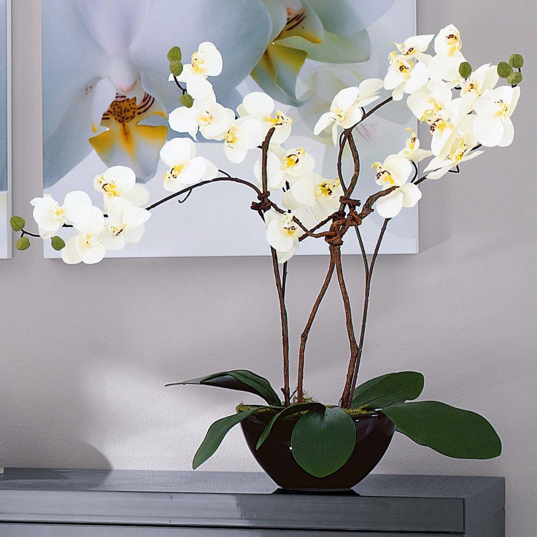 orchideentopf von PureDay